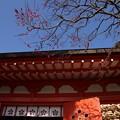 写真: 寒紅梅と朱色の本堂!140118