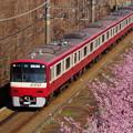 Photos: 河津桜と赤い京急電車!140304