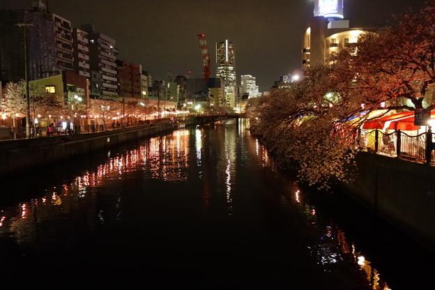 夜桜とランドマーク!