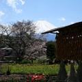 「びわ」の春