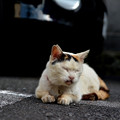 写真: 京島の猫