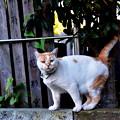 写真: 谷中墓地の猫