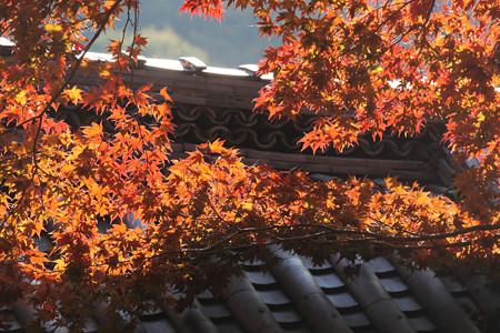 金蔵寺 - 20