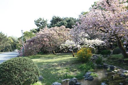 京都御苑 - 03