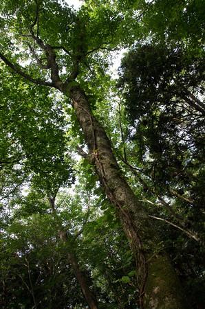 キョロロの森1