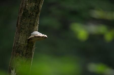 キョロロの森2