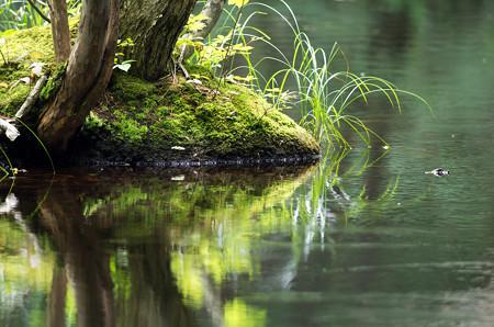 キョロロの森3