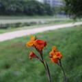 Photos: 花と河原