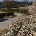吉備路自転車道
