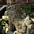 Photos: 西吉野大日川向賀名生(むかいあのう)の春日神社阿形