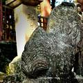 西吉野大日川向賀名生(むかいあのう)の春日神社吽形