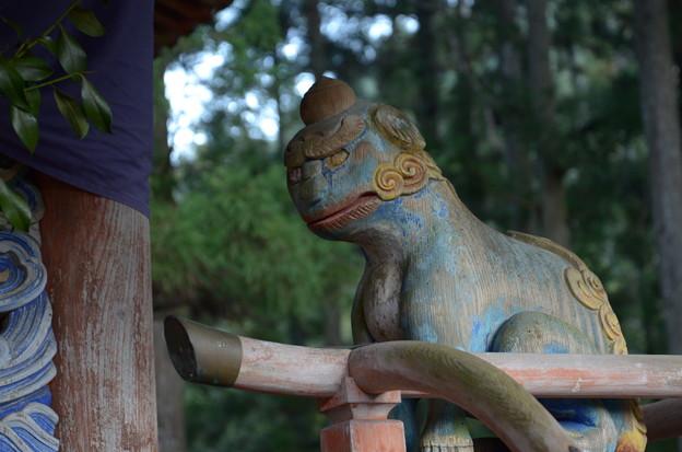 Photos: 野川弁財天の木彫り狛犬-吽形