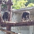 Photos: 20120921_095715