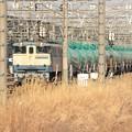 Photos: EF65PF 原色青プレート2119号機 宇都宮貨物(タ)