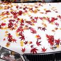 写真: 紅葉と車-01