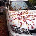 写真: 紅葉と車-04