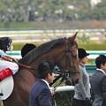 Photos: Kimini Hitomebore
