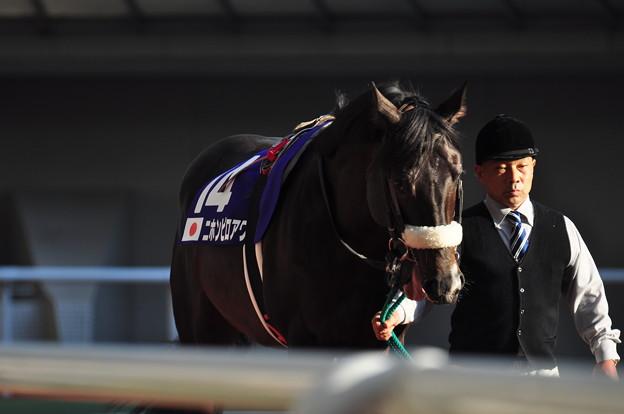 Photos: Nihonpiro Ours 01