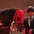 Photos: Horai Akiko