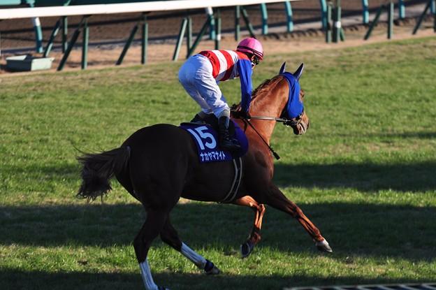 Nakayama Knight