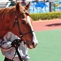 Photos: Sawayaka Yuta 06