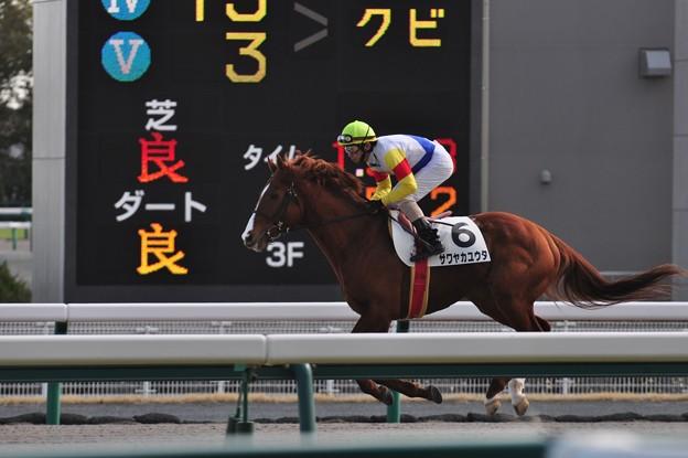 Sawayaka Yuta 11
