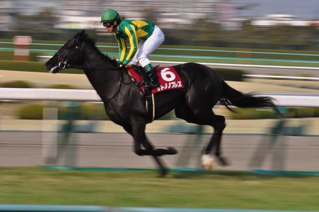 Satono Noblesse  02