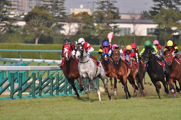 Photos: 阪神大賞典4コーナー 02