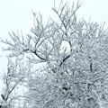 Photos: 木の枝も