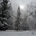 Photos: 冬景色
