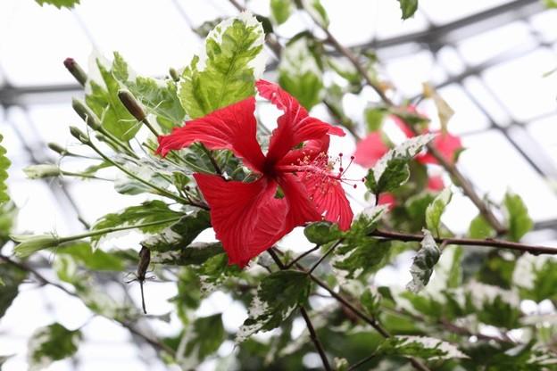 南国の花4-5