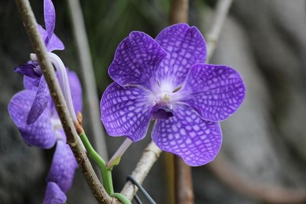 温室の花6-3