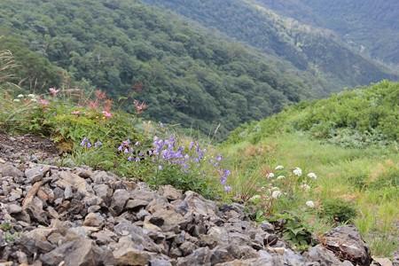 岩場にお花4-8