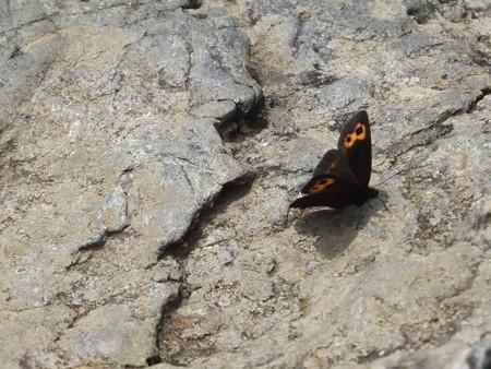 ここにも蝶々さん5-6