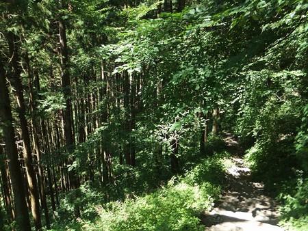 森林を進みます3-9