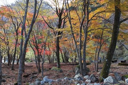 丹沢湖紅葉2-8
