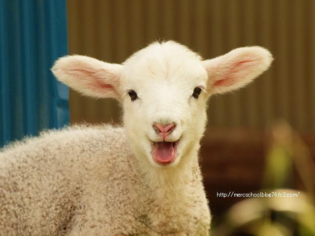 子羊の笑顔(^_^)