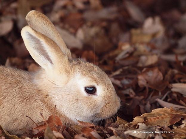 答えはウサギさんでした(^_^)