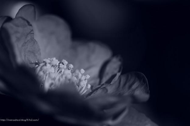 ツバキの花♪