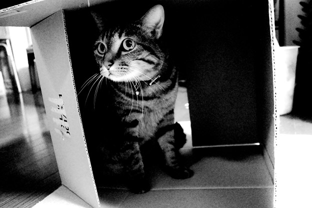 Photos: 箱入り猫