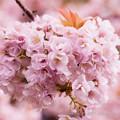 Photos: flower-9085