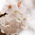 Photos: flower-9087