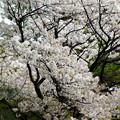 Photos: flower-9092