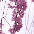 Photos: flower-9143