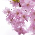 Photos: flower-9147