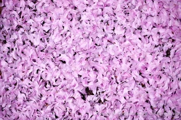 Photos: flower-9159