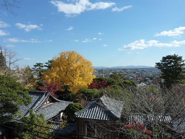 【松阪】松阪城跡|松阪公園[三重県]