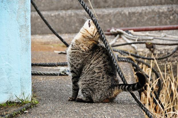 邪魔なロープ