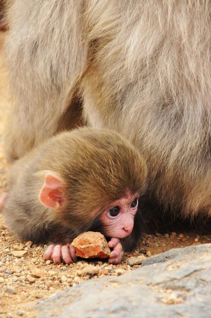 おびえる猿