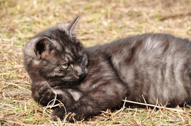 子猫の仕草1